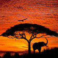 Fotomural African Sunset 4-501