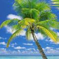 Fotomural Ari Atoll 4-883